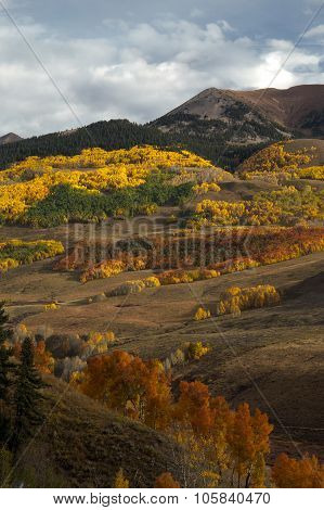 Colorado Autumn Color