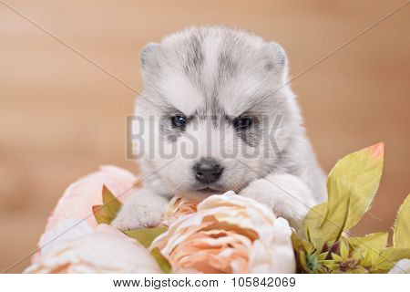 funny puppy with a bouquet of flowers