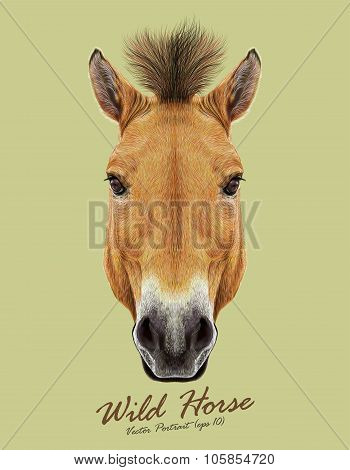 Vector Illustrated Portrait of Wild Horse on natural backgrould.