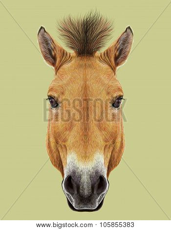 Illustrated Portrait of Wild Horse on natural backgrould
