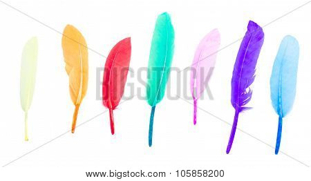 row of multicolored bird feathers