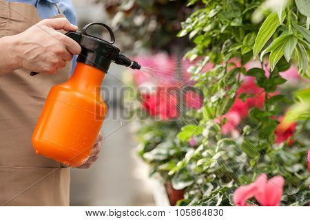 Professional senior florist is watering flowers at garden center