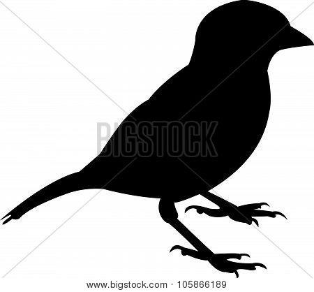 a sparrow silhouette vector