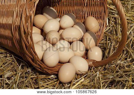 Big Eggs