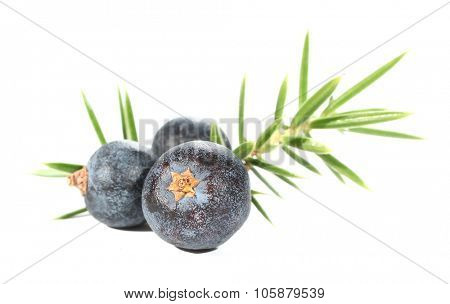 Juniperus berries juniper leaves