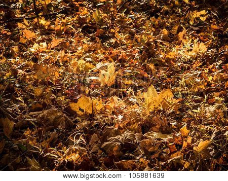 Autumn Grass and Leaves