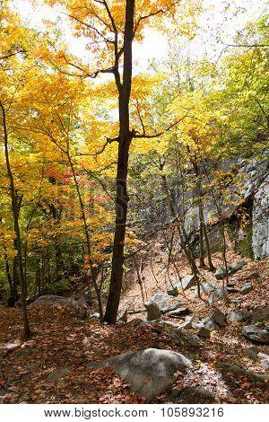 Down The Breackneck Ridge