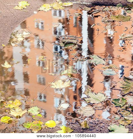 House Is Reflected In Puddle With Leaf Litter