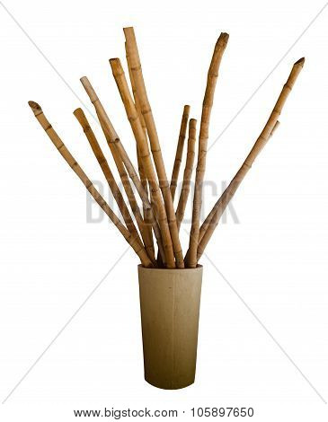 Bamboo in an urn isolated on white background