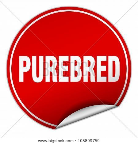 Purebred Round Red Sticker Isolated On White