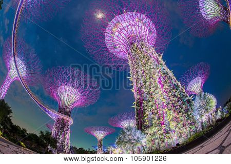 SINGAPORE - May 10: Night view of Supertree Grove at Gardens by the Bay on May 10, 2014 in Singapore