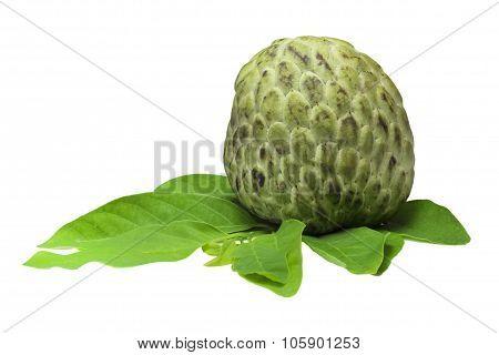 Custard Apple Tropical Fruit On A White Background,thailand