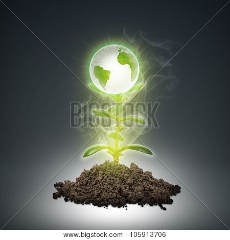 Ground with green plant and earth globe
