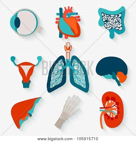 Medical icons of internal human organs