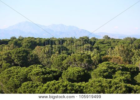 Green Forest And High Mountains