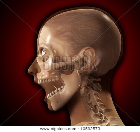Female X Ray Head