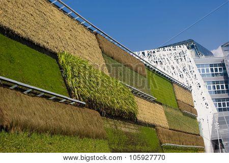 Vertical Plantations