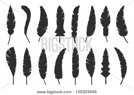 Feathers vector black and white silhouette collection. Feather vector illustration one color. Black vector feathers. Black solid feather. Feather isolated on white background. Feather vector