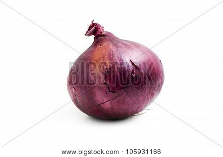 One Red Onion Isolated