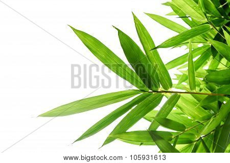 Bamboo Leaves In White Isolated