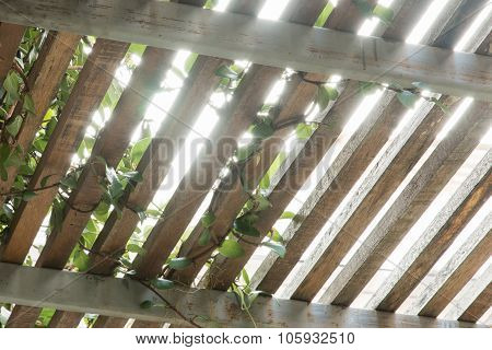 Wooden Lath And Sunshine