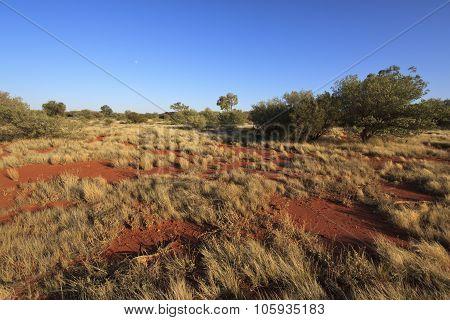 Outback Landscape - Australia