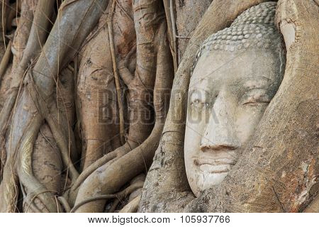 Buddha Head In The Wat Maha That Temple In Ayutthaya, Thailand