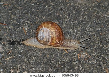 Snails On The Stone
