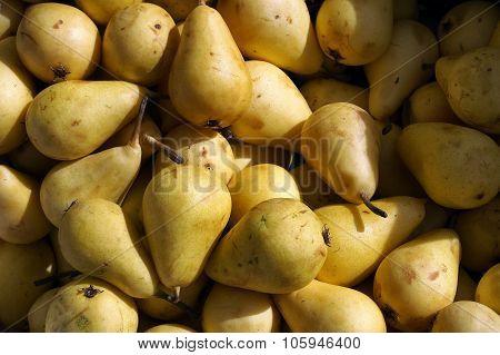 Food. Group of organic pears.