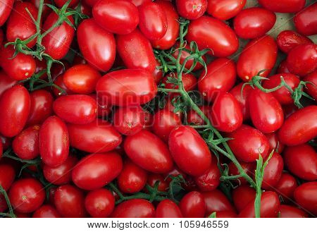 Food. Organic red tomatoes