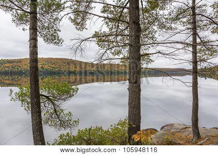 White Pine Trees Bordering A Lake In Autumn - Ontario, Canada