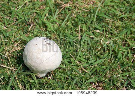 Mushroom Germinate On Ground With Grass