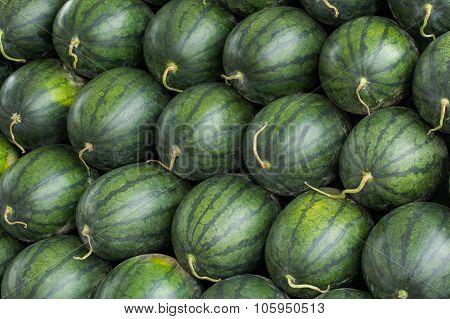 A Lot Of Watermelon, Pattern.