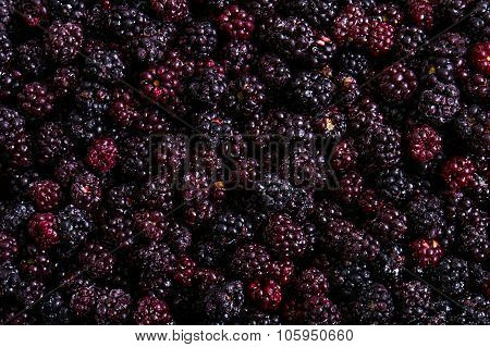 Frozen Domestic Wild Blackberries Background - Texture