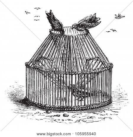 Basket sparrows, vintage engraved illustration. Magasin Pittoresque 1877.