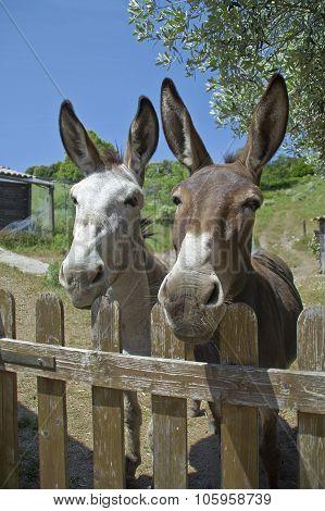 Donkeys in Corsica, 05.2015
