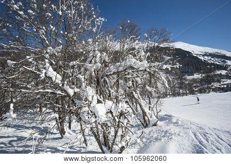 Skiers On Piste Through Trees