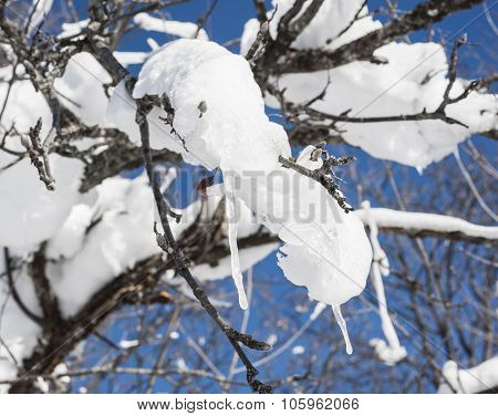 Closeup Of Frozen Snow And Ice On A Tree Branch
