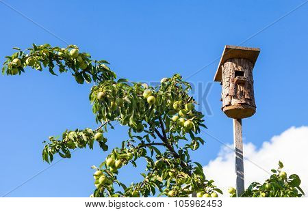Summer Scene With An Empty Birdhouse And Apple Tree Against Blue Sky