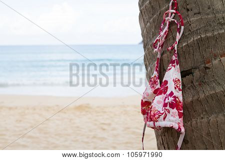 Bikini Top Hanging On A Palm Tree On Tropical Island
