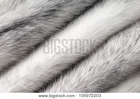 Silver cross mink fur texture macro