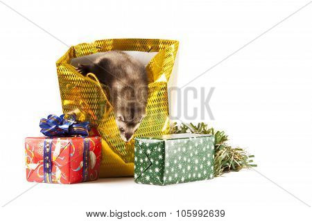 Young Ferret With Christmas Gifts