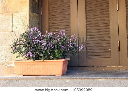 Window And Flower Pot
