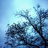 Bare Branches Of A Tree In Winter