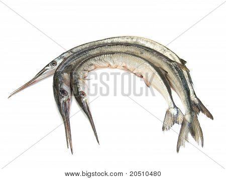 Garfish (Belone belone) raw