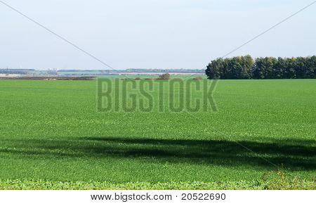 Green fields Chernozem