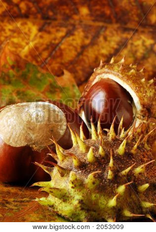 Conkers And Leaves
