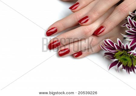 Beautiful Hand With Perfect Nail Red Manicure And Violet Exotic Flowers. Isolated On White Backgroun