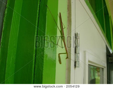 Mantid On Green Jamb