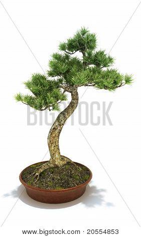 Árvore de Bonsai em vasos